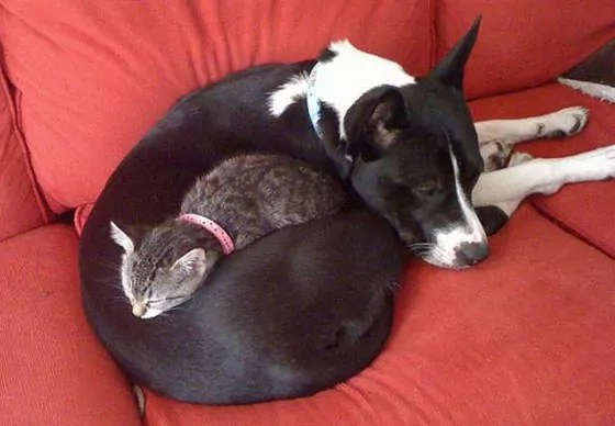 Top 10 Funny And Weird Images of Cat And Dog Love Each Other -08