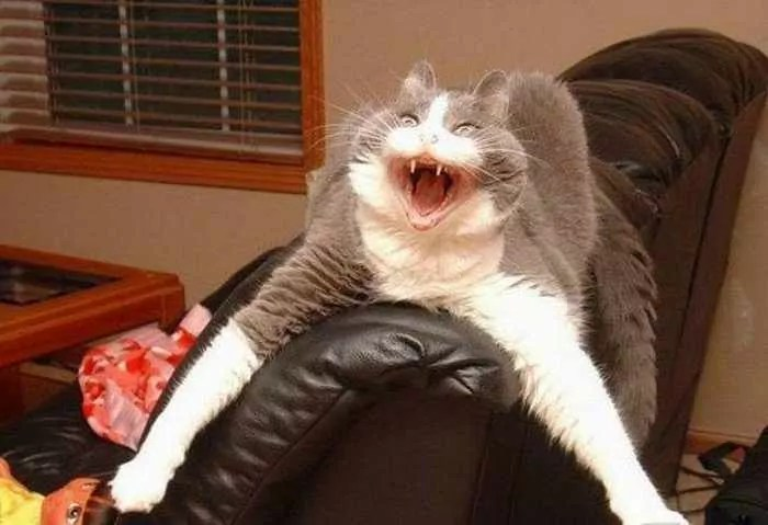 Funny Cats Captured At Unusual Time - 17 Pics -12