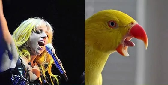 10 Funny Pop Star Celebrities Looks Like Bird Will Blow Your Mind -06