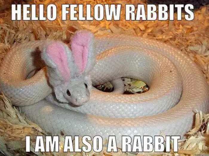52 Funny Easter Memes That Will Make Your Holiday -21