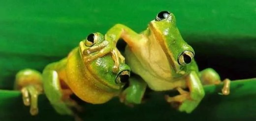 funny-frogs-09