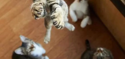funny-jumping-cat