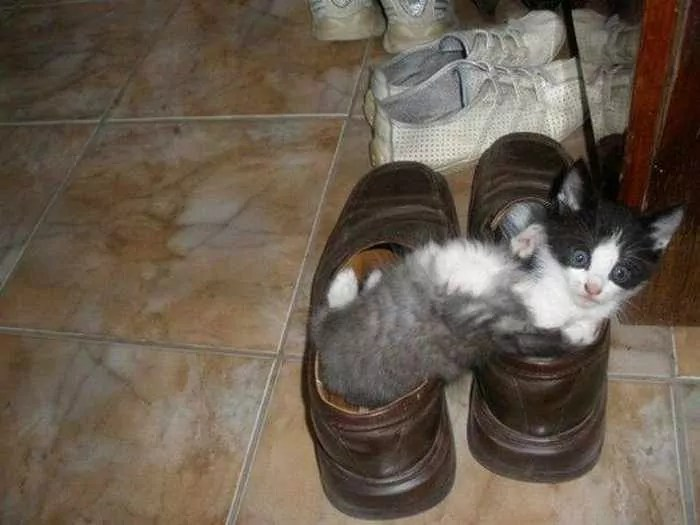 8 Awesome Funny Pictures of Cute Kittens -01