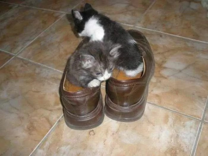 8 Awesome Funny Pictures of Cute Kittens -02