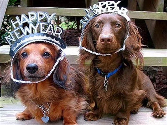 Funny New Year Wishes, Quotes, Pictures and Resolutions - 45 Pics -10