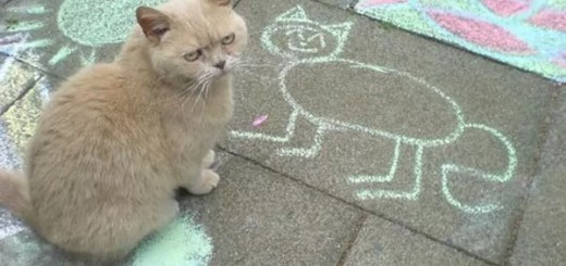 funny-picture-unhappy-cat