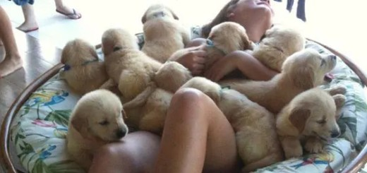funny-puppies-and-girl