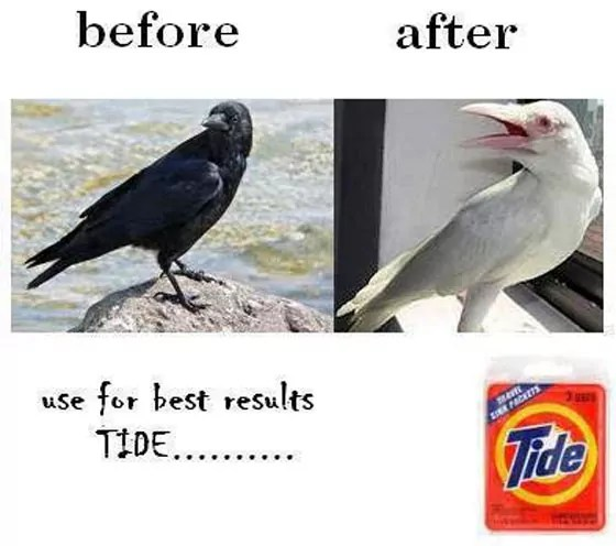 Funny Crow Before And After Use Of Tide Will Make You LOL
