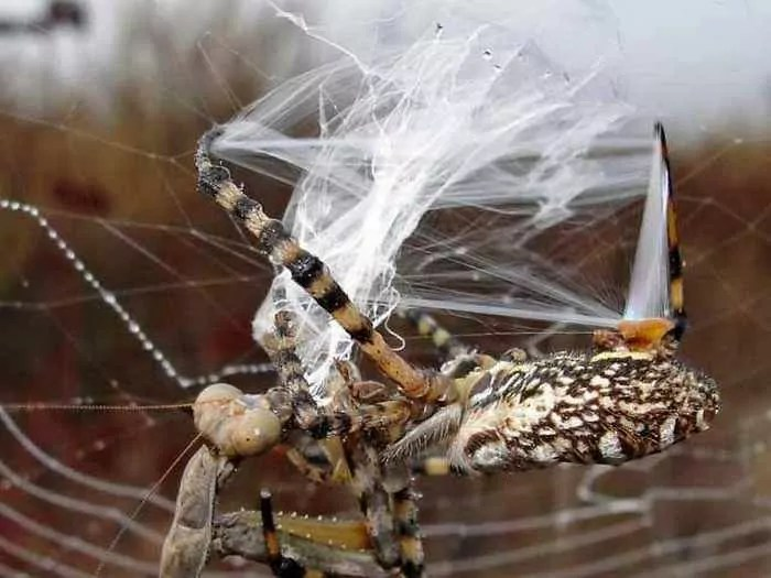 This Spider VS Mantis Battle Will Blow Your Mind - 8 Pics -05