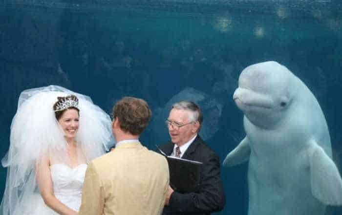 42 Hilarious Pictures of Unexpected Wedding Photobombs Will Make You LOL -02