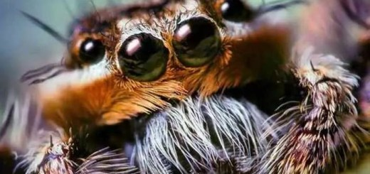 unseen-insects-close-ups-03