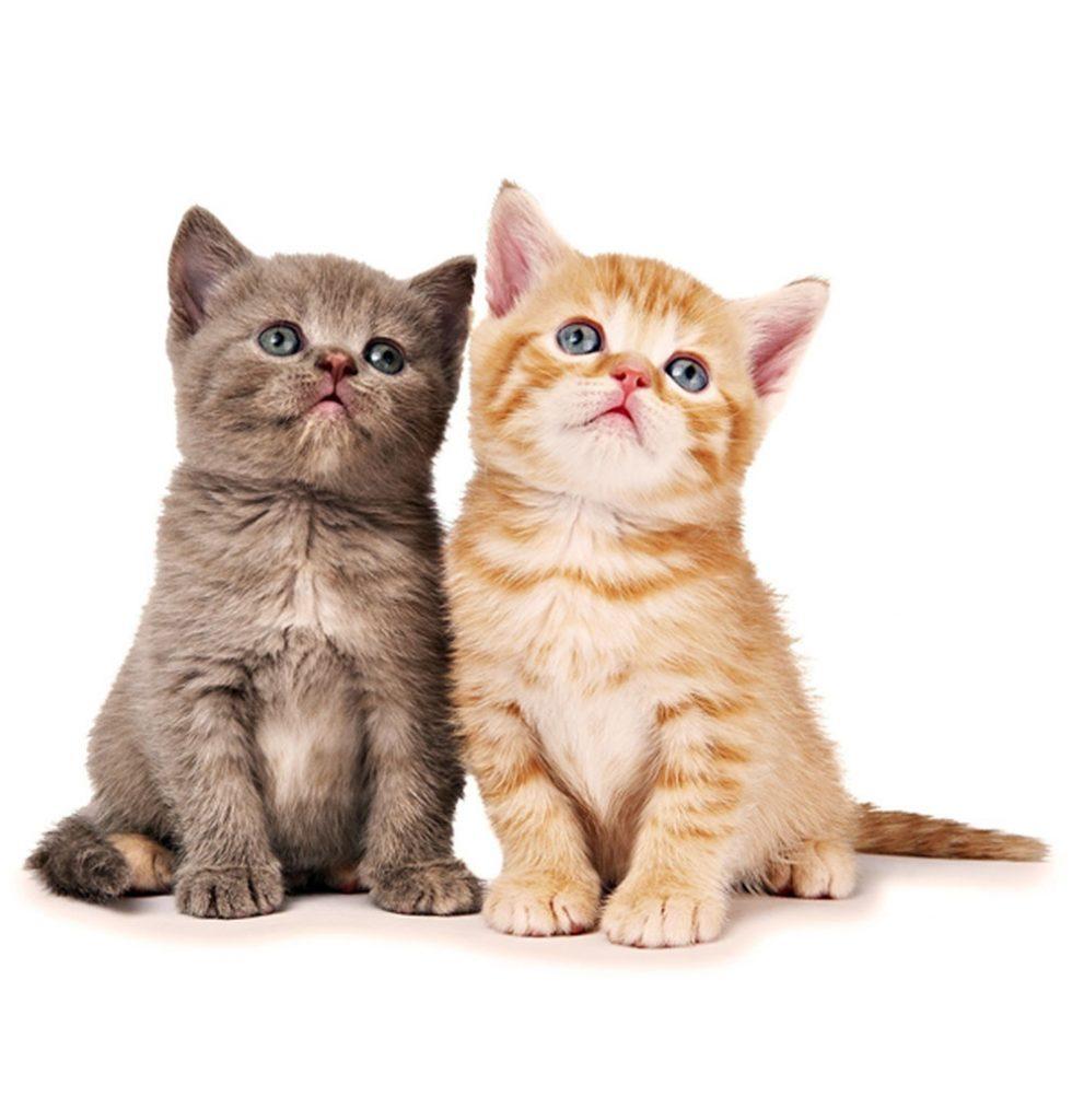 Cats Wadars