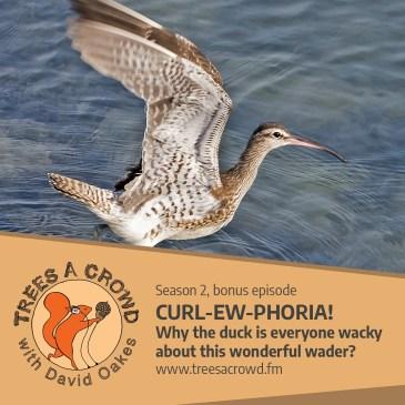 CURL-EW-PHORIA! podcast