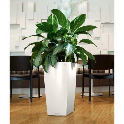 plant oman