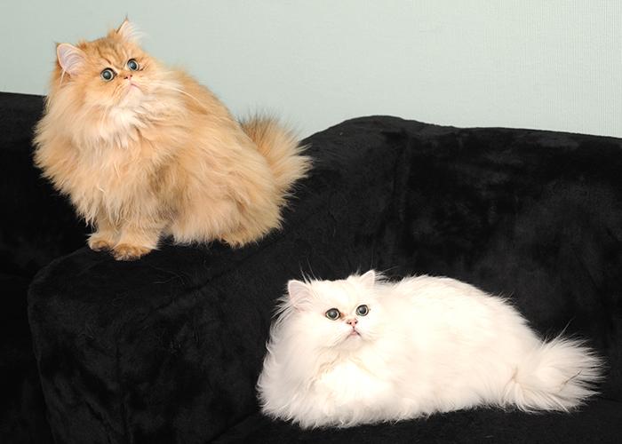 Rusty & Milo