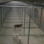 Dog Runs - outside portion of kennels