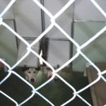 Kennel Doggie Doors