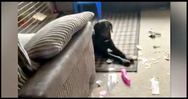 Owners Mortified When Their Dog Ripped Open Neighbor's ...