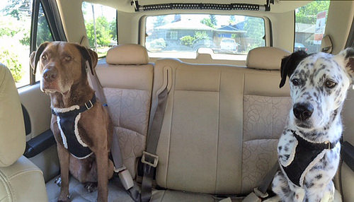 Best Way To Keep Dog Safe In Car