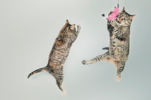Cats Jumping and Playing