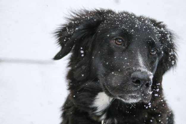 Fluffy Dog in Snow
