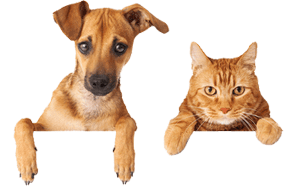Pet sitting dogs and cats.