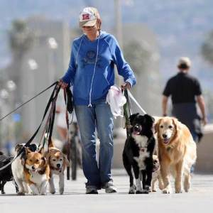Larry Walking Dogs