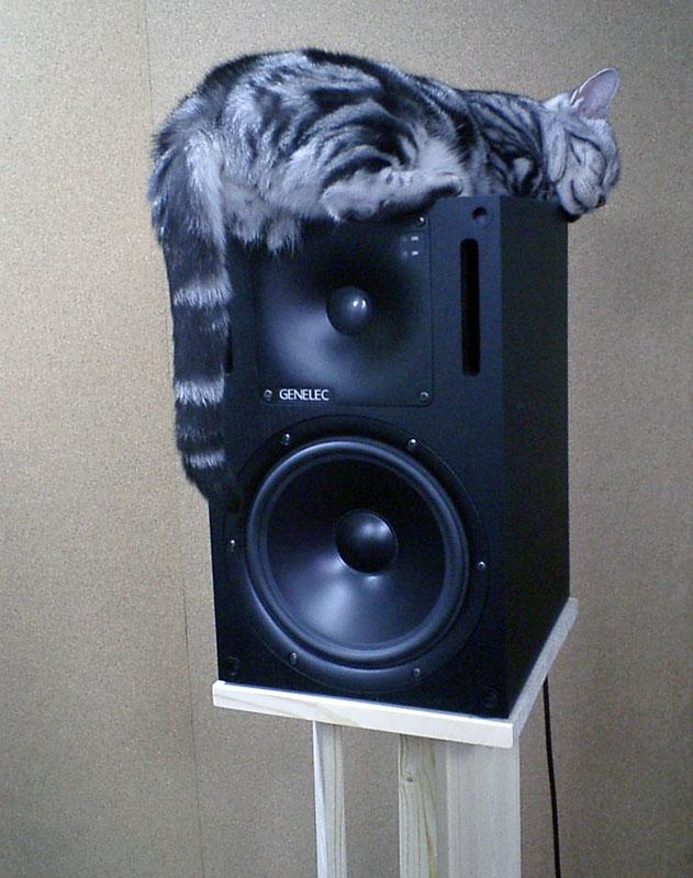 cat on a speaker