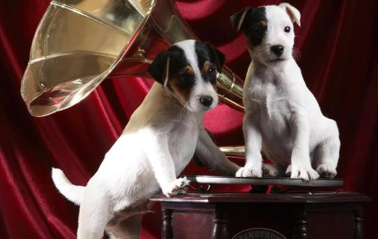 puppies on a gramophone