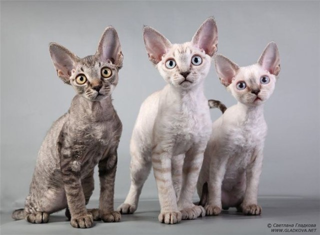 Multiple Cats
