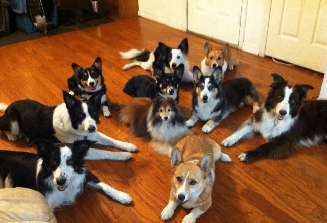 multiple pets
