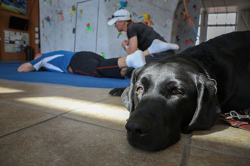 Canine Therapy
