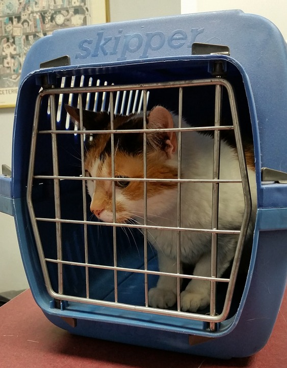 Traveling in the Car with Your Cat