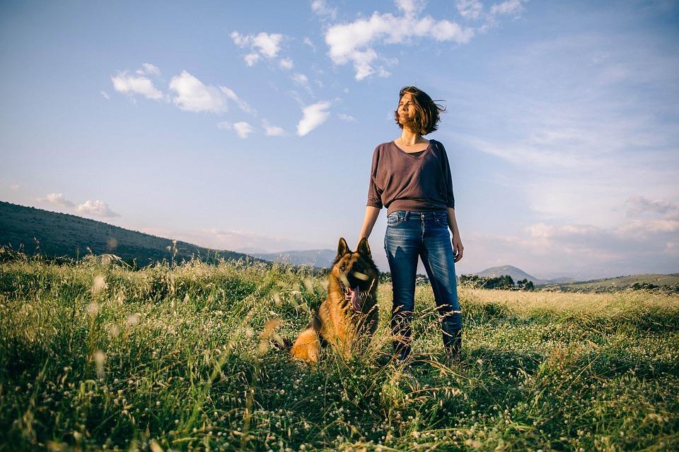 German Shepherd field