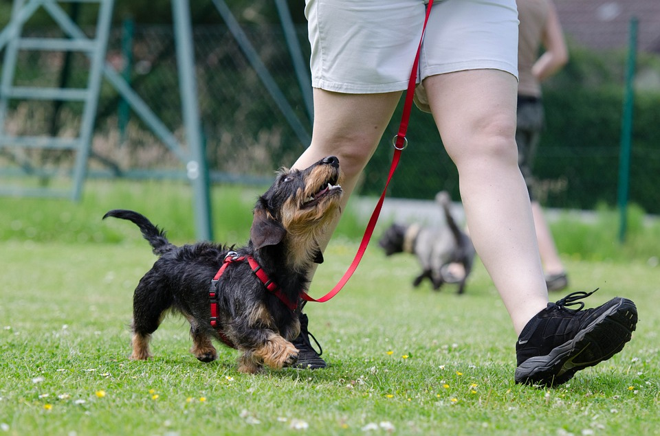 Dog Obedience Training with a Professional Group Class