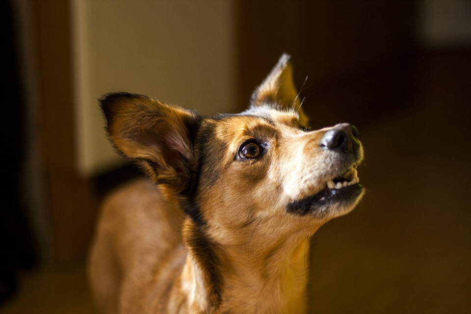 Dog Obedience Training with a Professional In-Home Classes