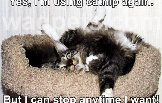 Yes, I'm using catnip again. But I can stop anytime I want!