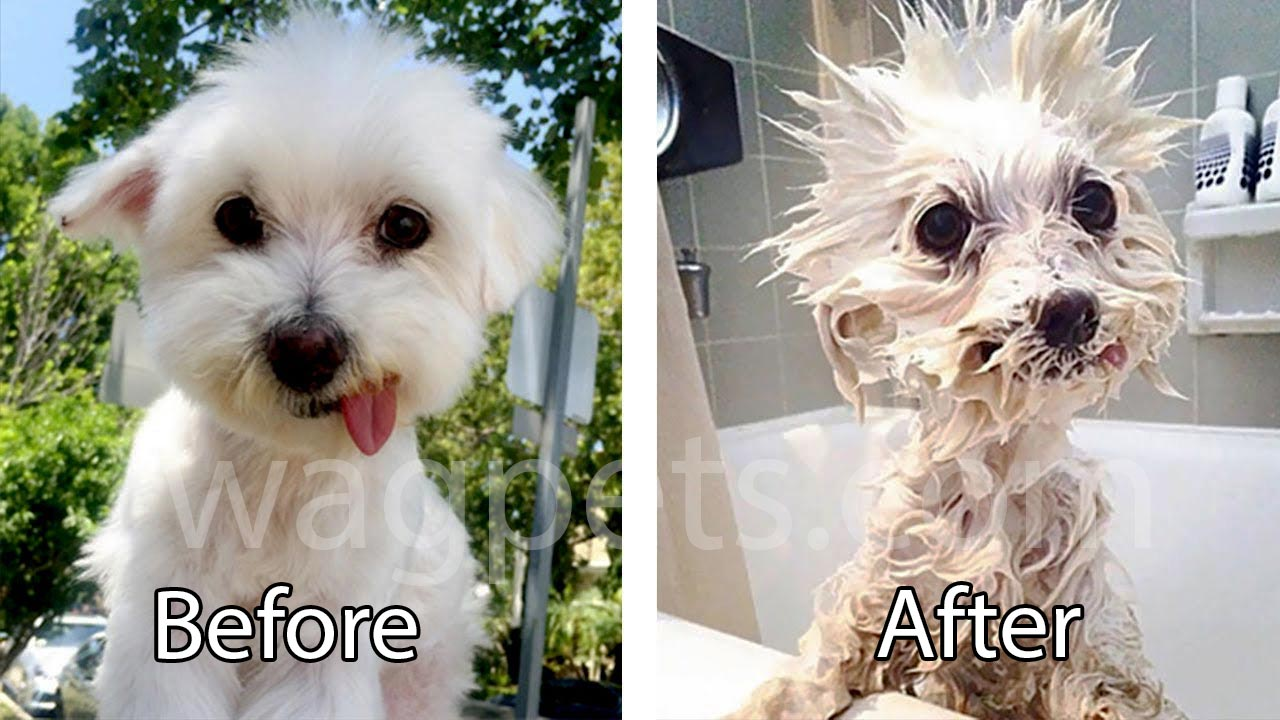 Dog before and after bath
