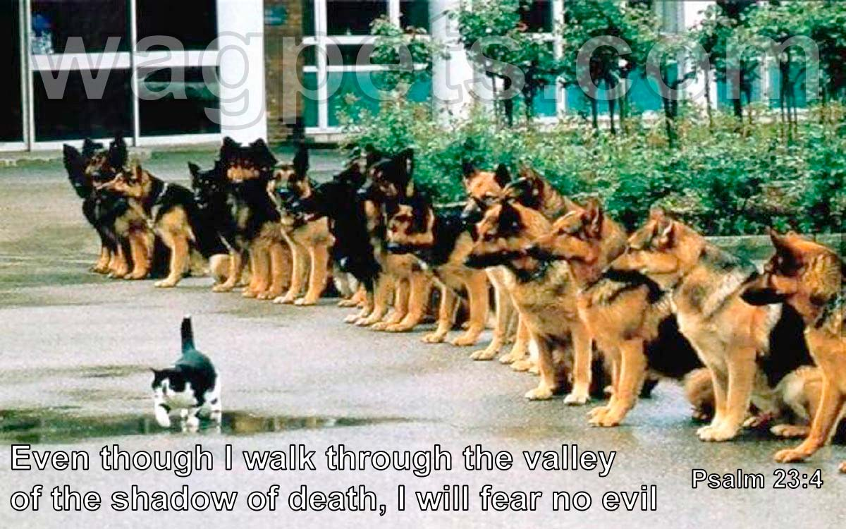 Even though I walk through the valley of the shadow of death, I will fear no evil.