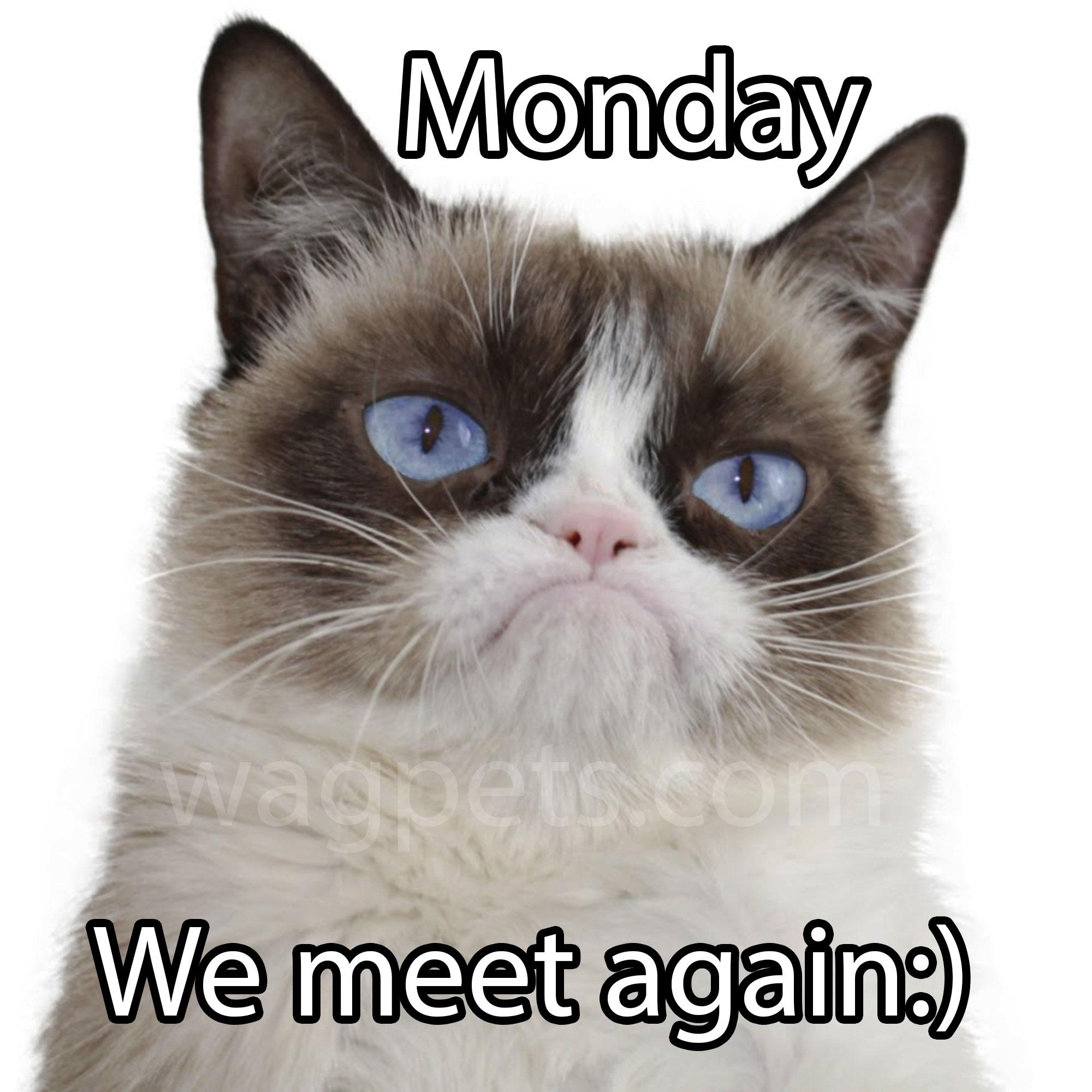 Monday we meet again
