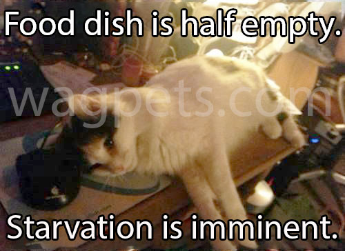 Food dish is half empty. Starvation is imminent.