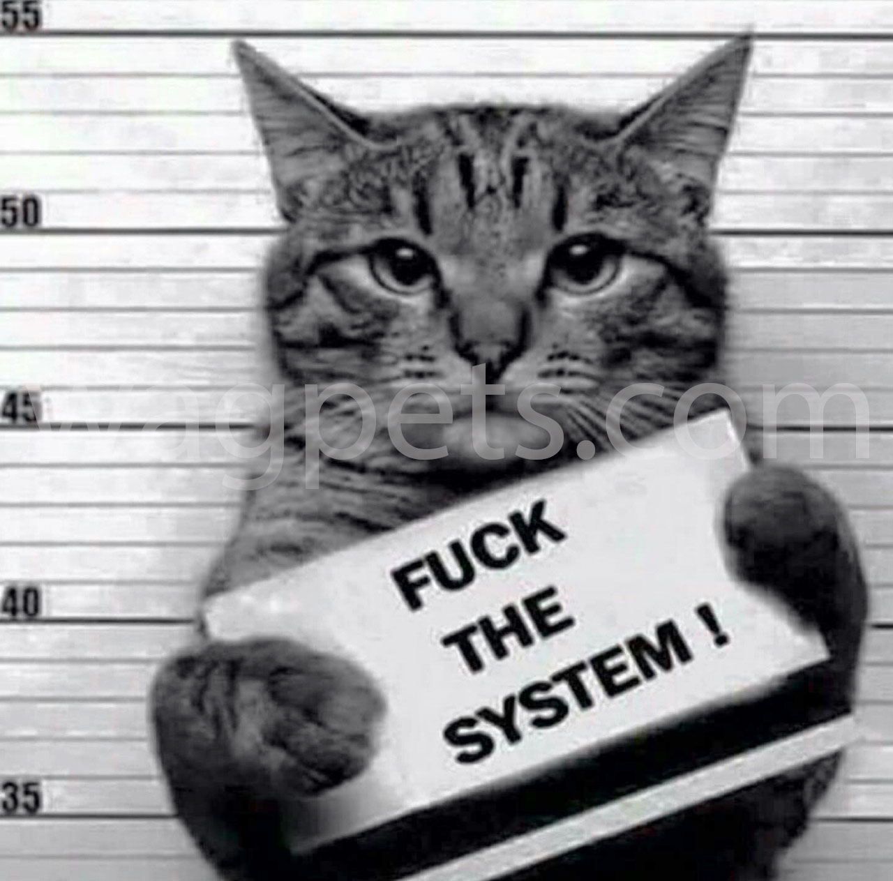 Fuck the system!