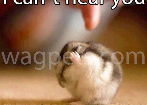 I can`t hear you! Blah-blah-blah