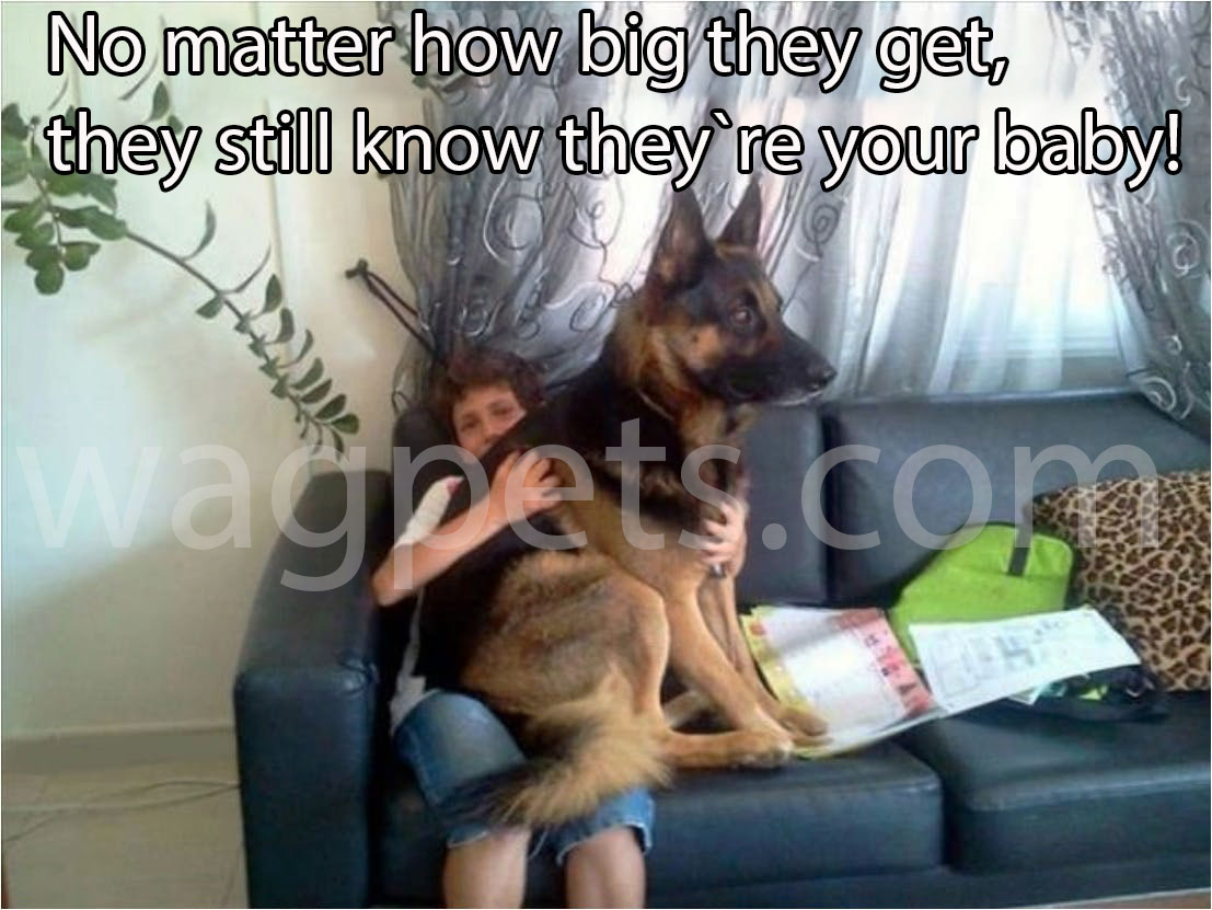 No matter how big they get, they still know they`re your baby!