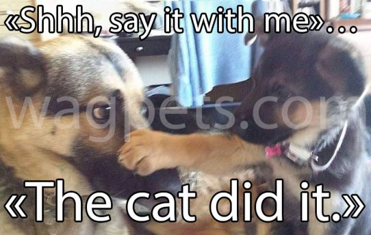 «Shhh, say it with me»… «The cat did it.»