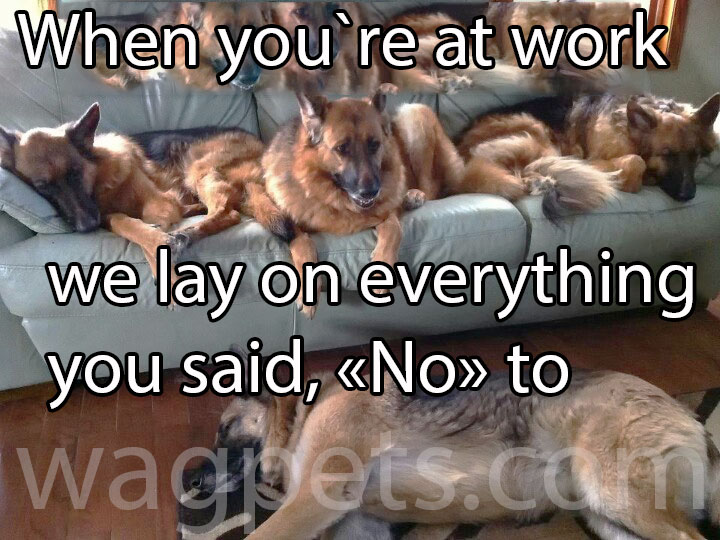 When you`re at work we lay on everything you said, «No» to