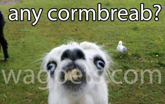 Hi! Y`all got any cormbreab?