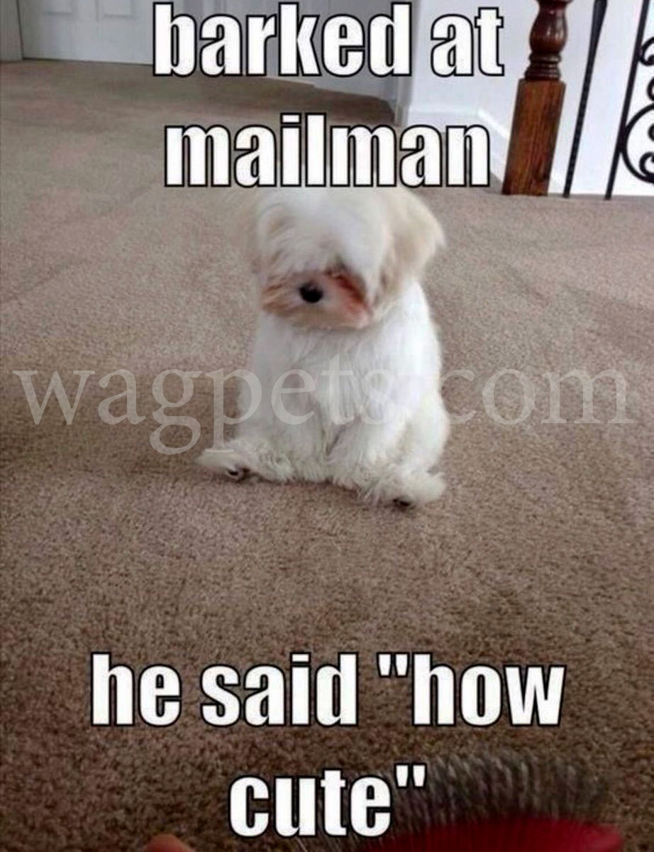barked at mailman - he said «how cute»