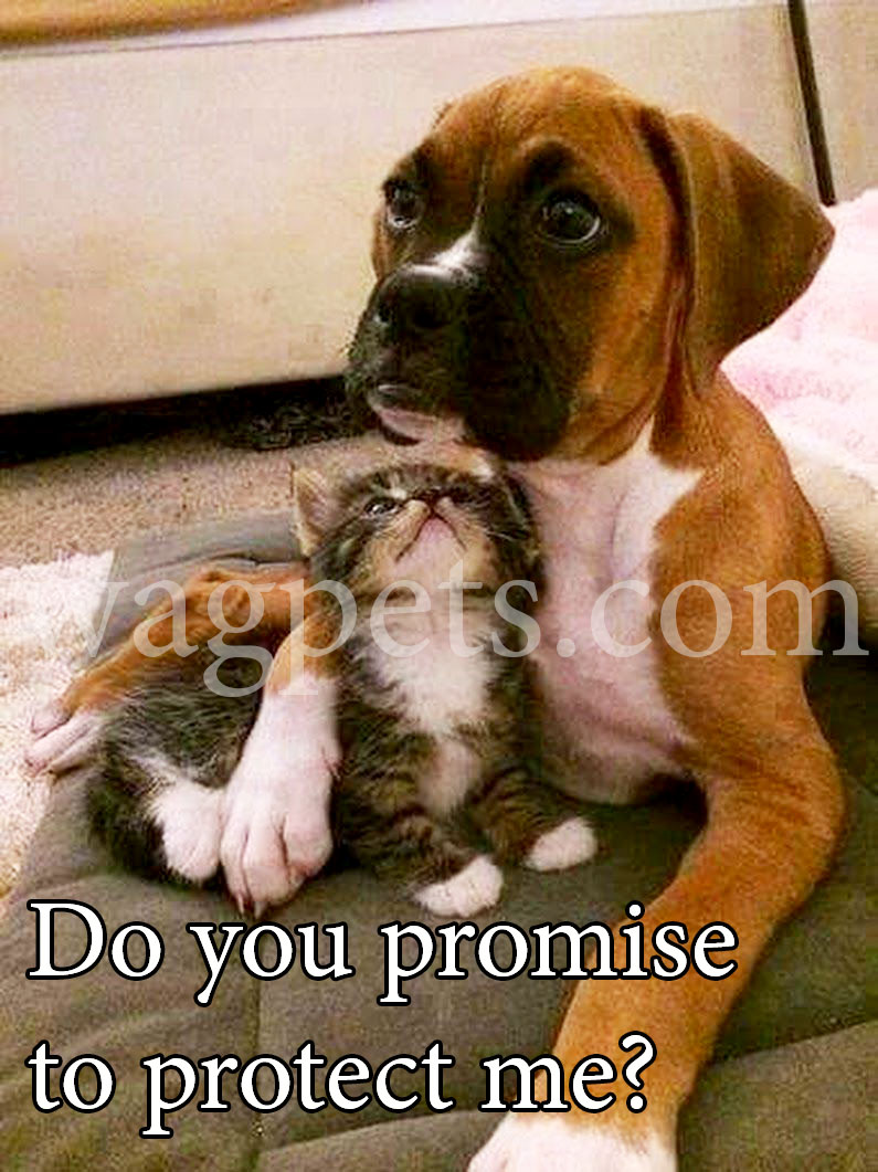 Do you promise to protect me?