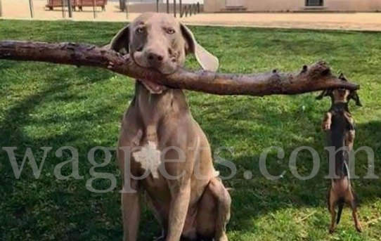 Branch manager and assistant branch manager.